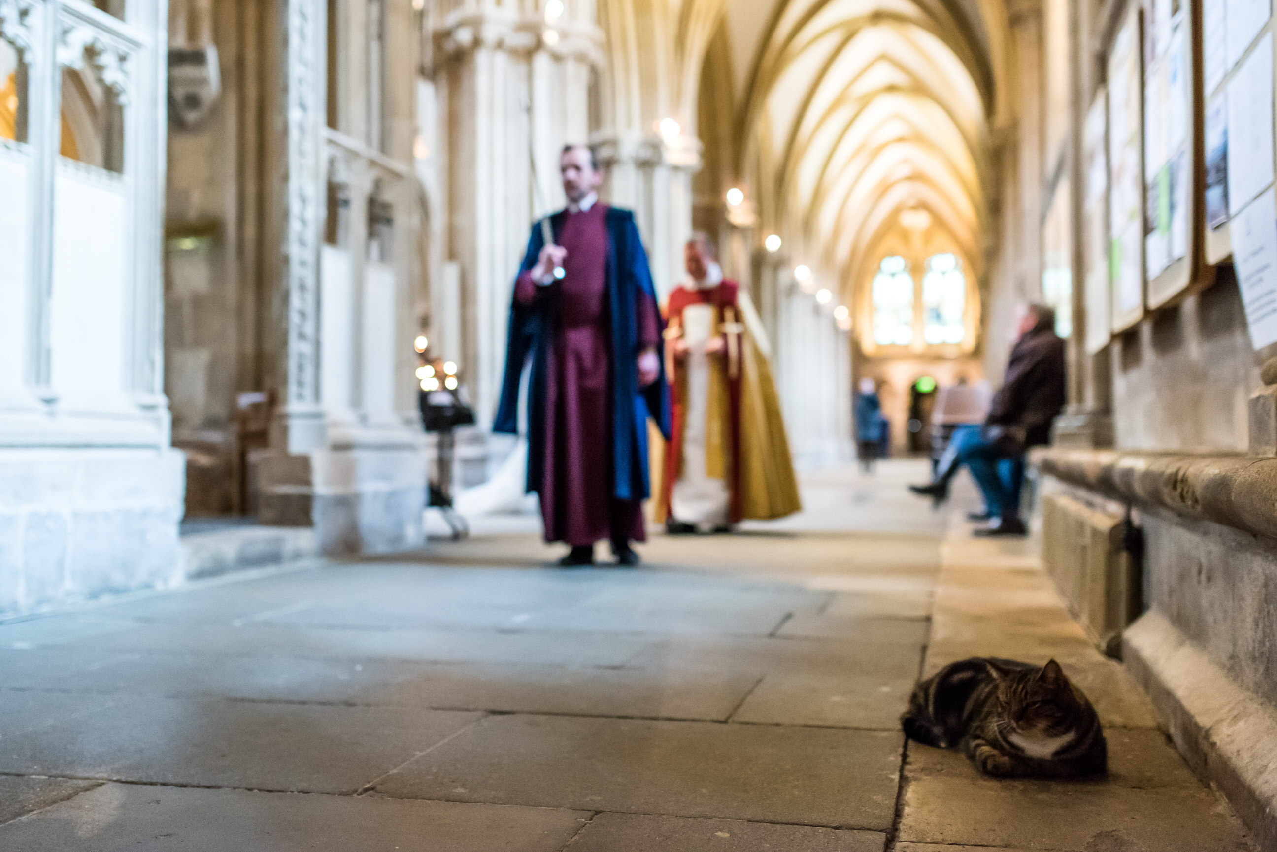Wells Cathedral cat