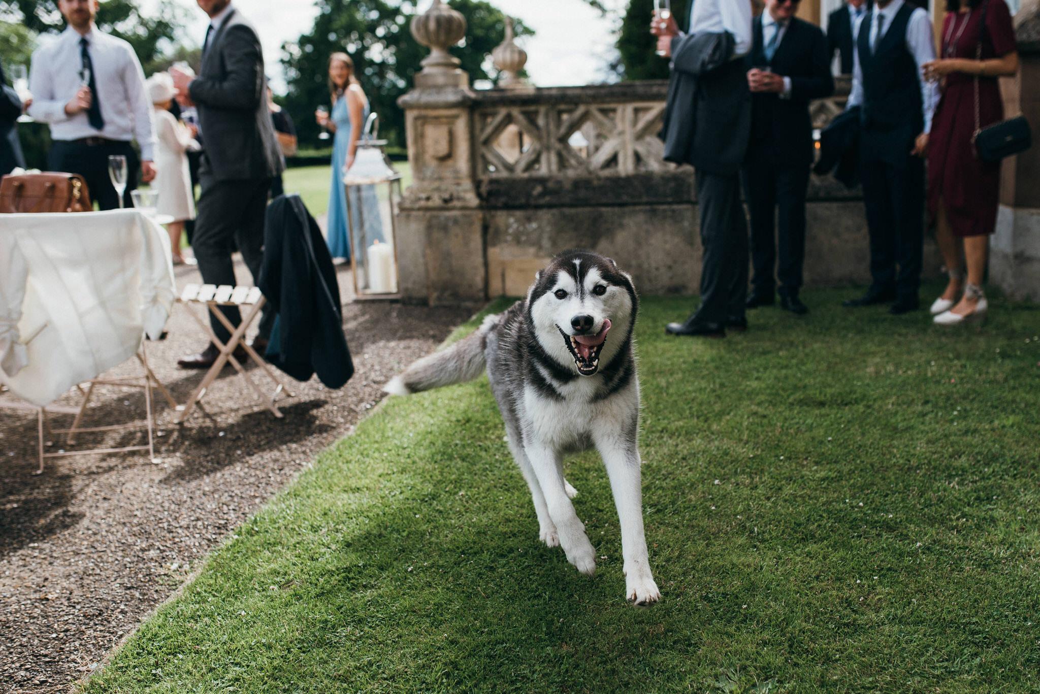 Dog at Nonsuch Mansion wedding