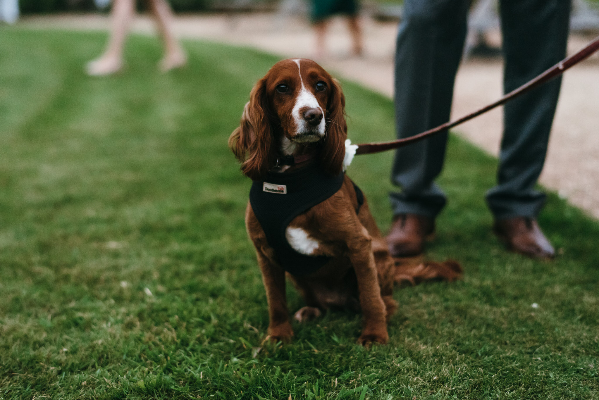 Dog at Backwell house wedding