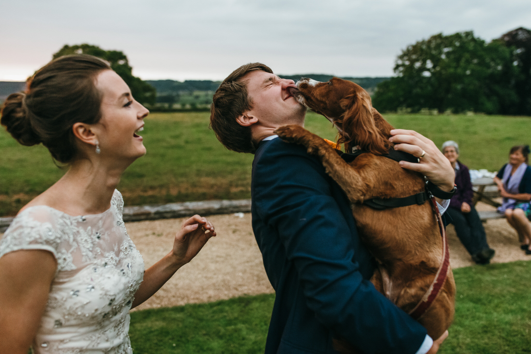 Dog kisses groom at wedding