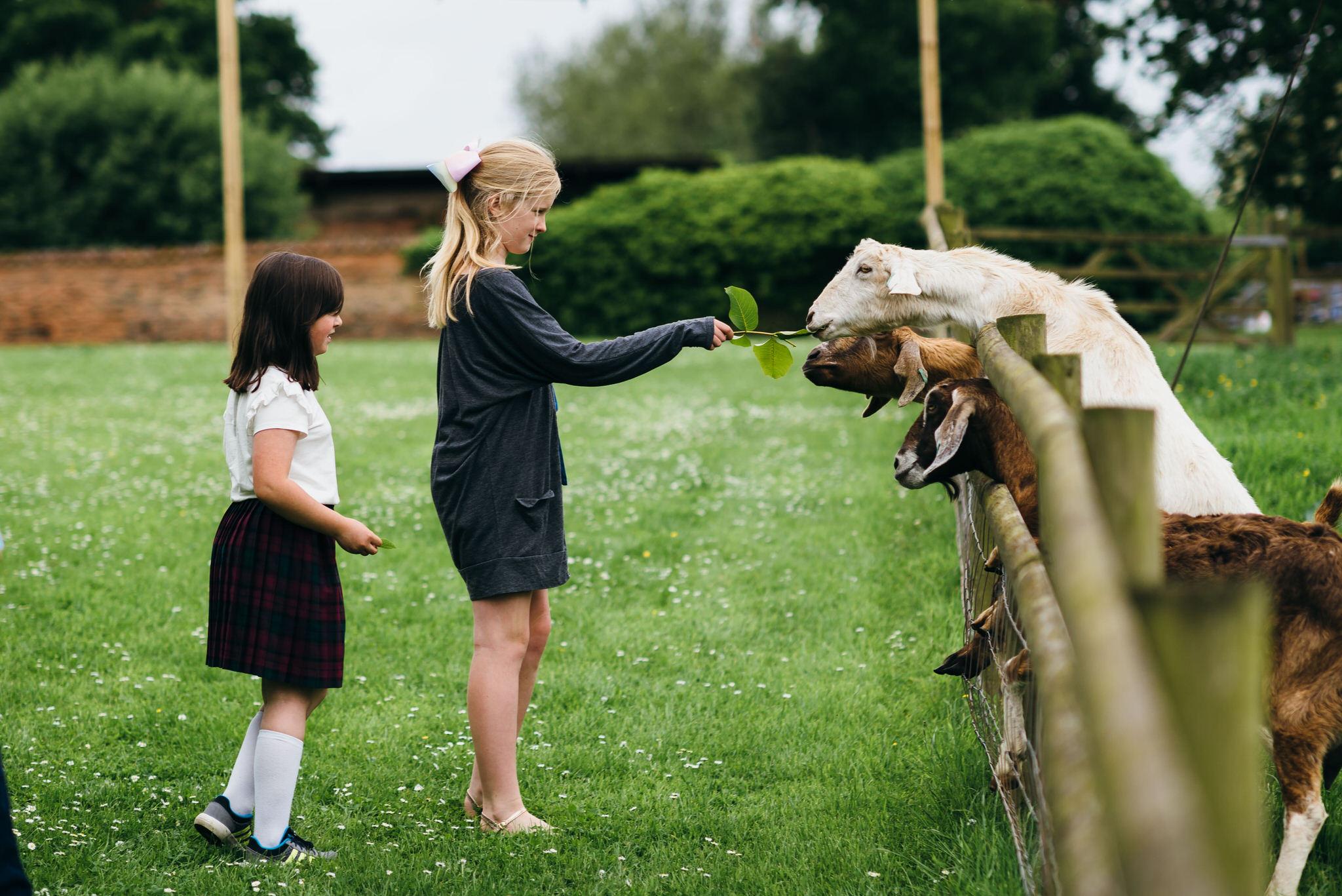 Huntstile organic farm goat